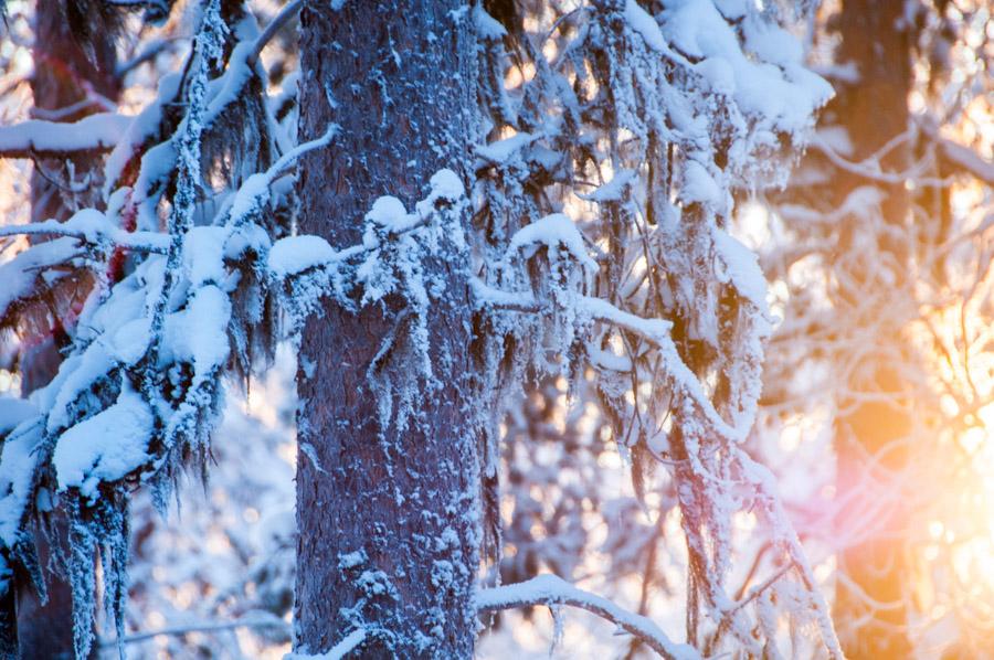 annahagvarn_Finland13-14LR-1